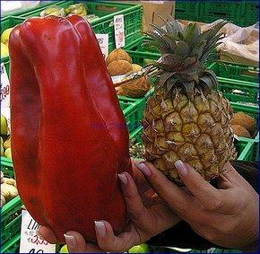 ГМО: перец и ананас