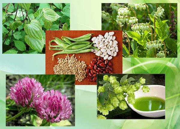 Лечение климакса у женщин лекарственными травами с эстрогенами
