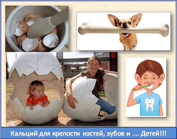 Скорлупа яиц - для крепости зубов