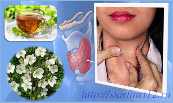 Лапчатка и щитовидная железа
