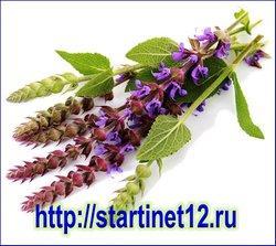 Лечебные свойства травы шалфей лекарственный