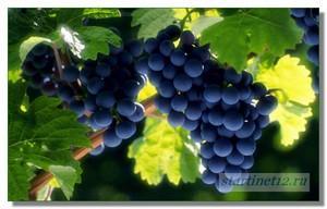 Синий виноград!