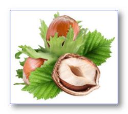 Лесной орех, лещина