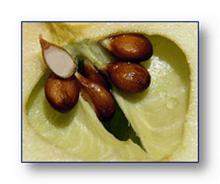 Полезные семечки от яблок