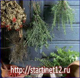 Сорняки на даче - лучшие целебные лекарственные растения