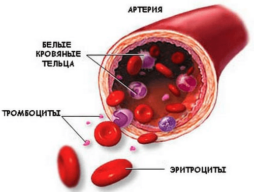 Гемоглобин крови