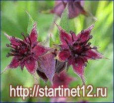 Трава сабельник болотный - применение в народной медицине