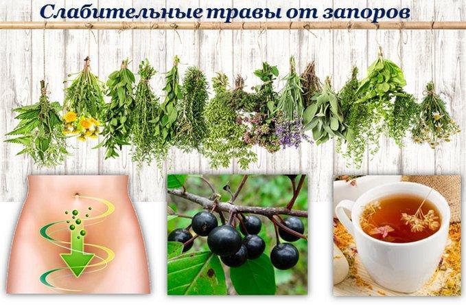 Какие травы помогают от запора