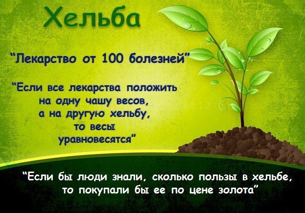семена хельбы от паразитов