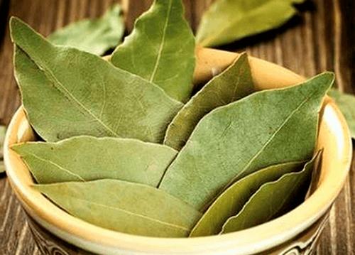 Лавровый лист, лечебные свойства