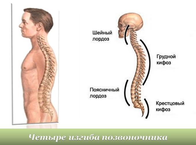 Физиологический лордоз и кифоз позвоночника