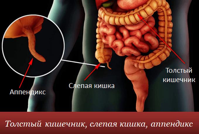 Аппендицит. Симптомы у взрослых