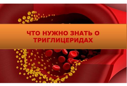Триглицериды - что это такое